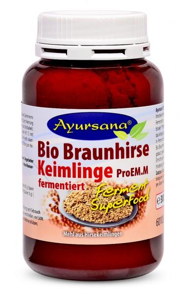 Braunhirse Keimlinge (BIO)